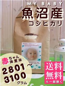 出産内祝い体重米 MY BABY魚沼:2801~3100g