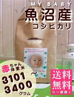 出産内祝い体重米 MY BABY魚沼:3101~3400g