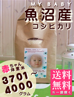 出産内祝い体重米 MY BABY魚沼:3701~4000g