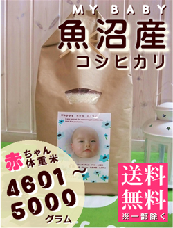 出産内祝い体重米 MY BABY魚沼:4601~5000g