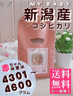 出産内祝い体重米 MY BABY新潟:4301~4600g