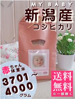 出産内祝い体重米 MY BABY新潟:3701~4000g