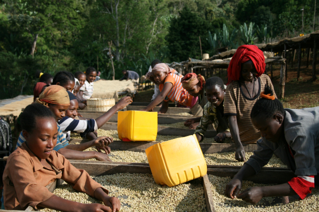 エチオピア イルガチェフェ ウォテ シティロースト(200g)[eti8] 〔コーヒー豆(モカ)/通販〕