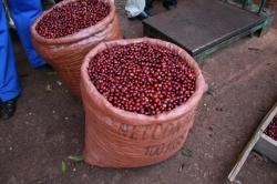 エチオピア イェルガチェフェ ゴティティステーション シティロースト(200g)[eti7] 〔お取り寄せ/コーヒー豆(モカ)/通販〕
