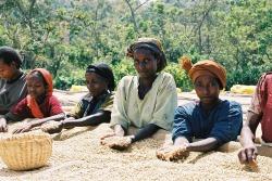 エチオピア イルガチェフェG2「ネグレ・ゴルビツ農協」 シティロースト(200g)[eti5] 〔お取り寄せ/コーヒー豆(モカ)/通販〕