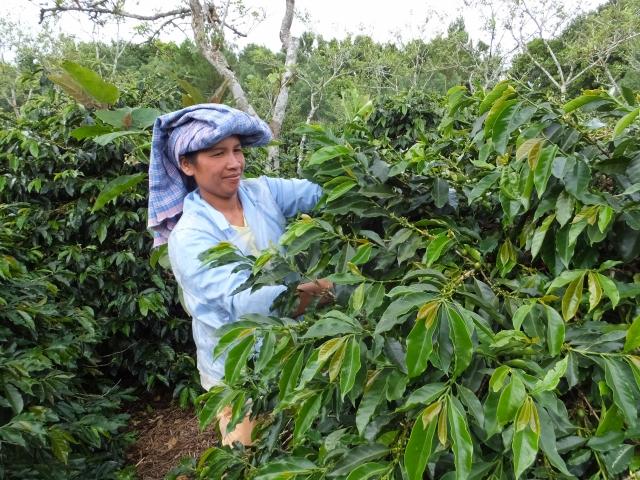 インドネシア マンデリン シナール フレンチロースト(200g)[rm-1]〔深煎り/コーヒー豆/お取り寄せ/通販〕