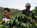 コロンビア ウィラ 「ラ・ベガ農園」 シティロースト(200g)