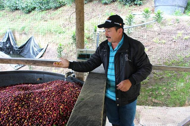 コロンビア ウィラ ラ・チョレラ農園 シティロースト(200g)