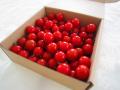 【ミニトマト】 キャロルセブン 1kg 無農薬栽培 (送料無料)