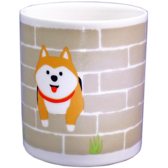 塀からこんにちはマグ 柴犬