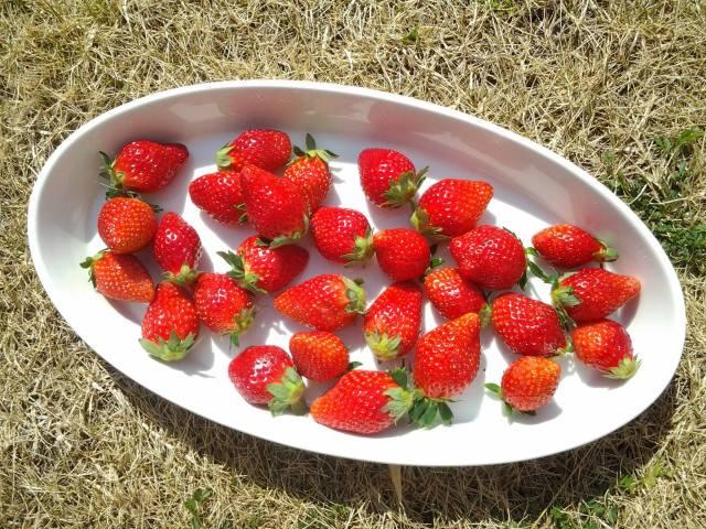 10月10(土)開催 おやつまみ遠足 ~完全無農薬のイチゴの苗を自分で植えてMY苺を作ろう@アルル農園~