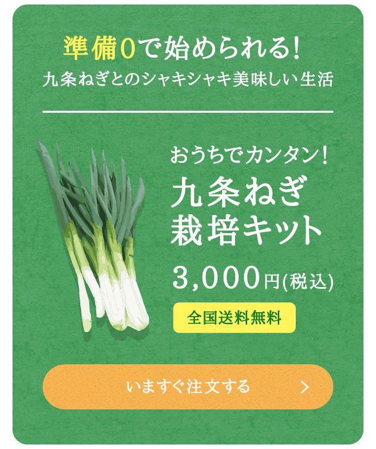 九条ねぎ栽培キット