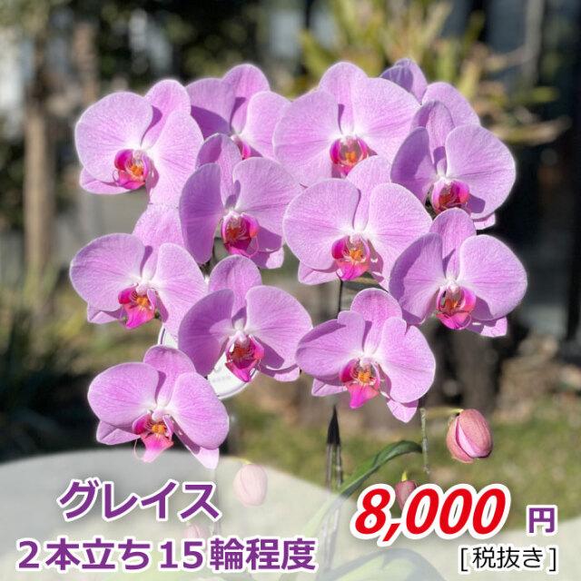 グレイス1株2F_金額