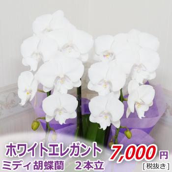 <お供え・お悔やみ>ホワイトエレガント2本立
