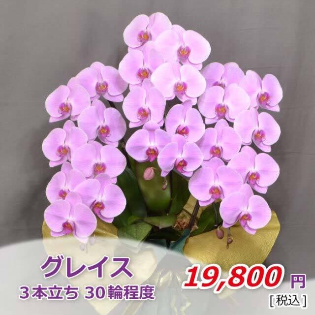 ピンク3本30輪程度(税込)