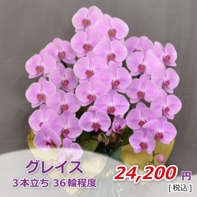 ピンク3本36輪程度(税込)