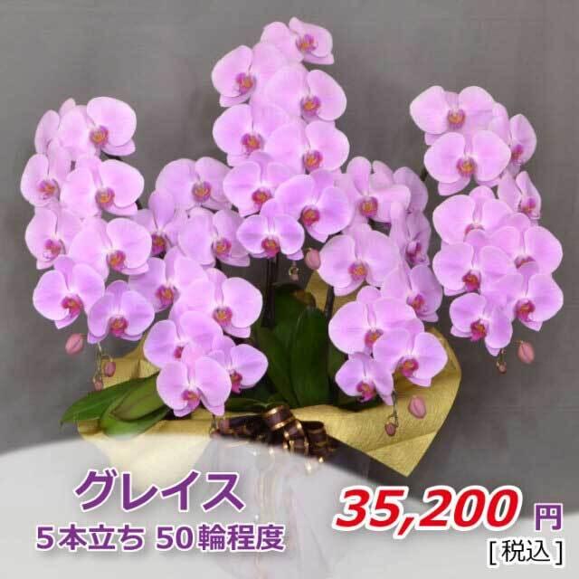 ピンク5本50輪程度(税込)