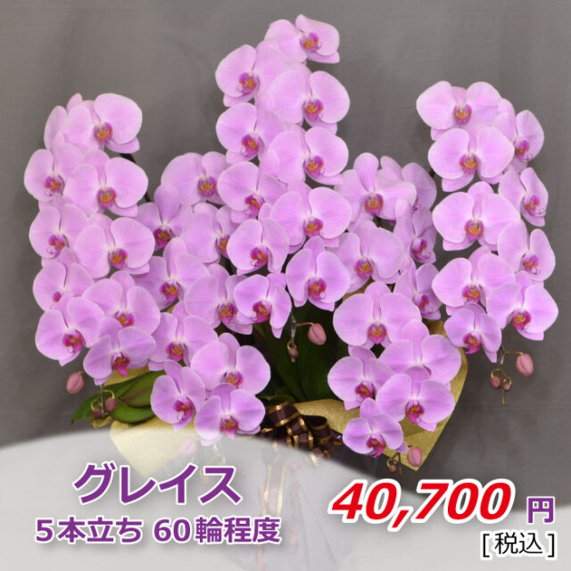 ピンク5本60輪程度(税込)