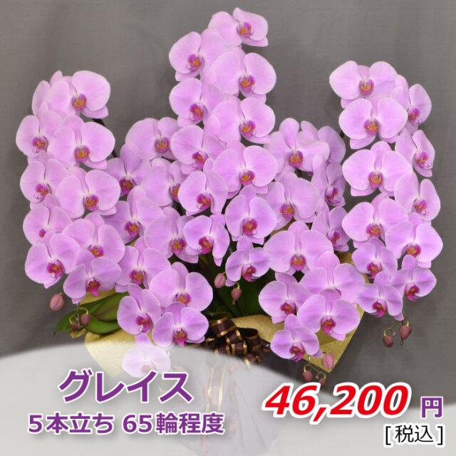 ピンク5本65輪程度(税込)