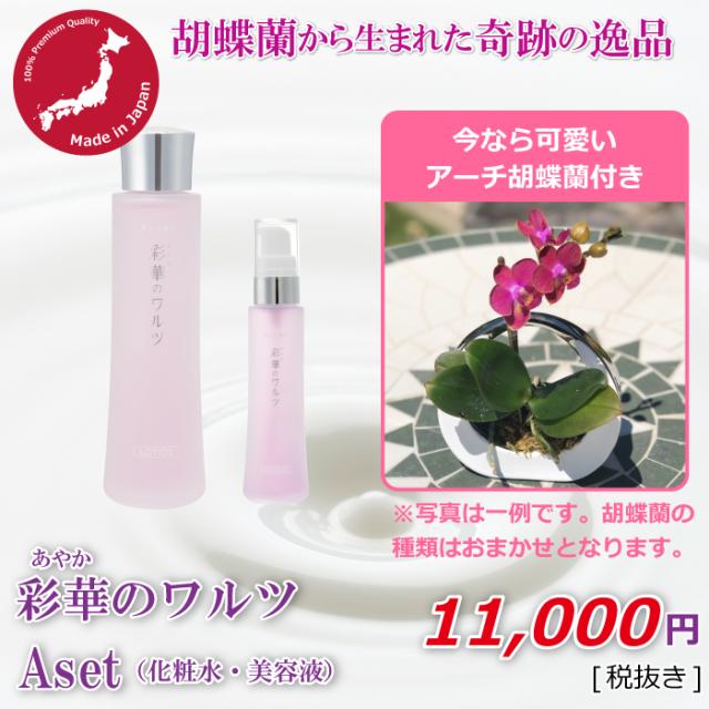 Aセット+アーチ胡蝶蘭