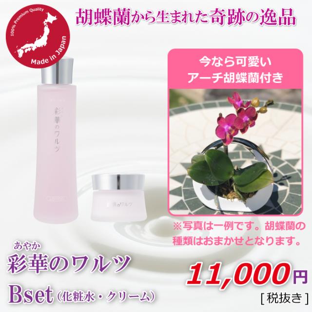 Bセット+アーチ胡蝶蘭