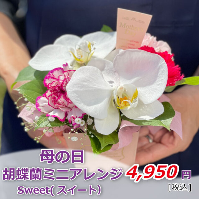 胡蝶蘭ミニアレンジ スイート 価格