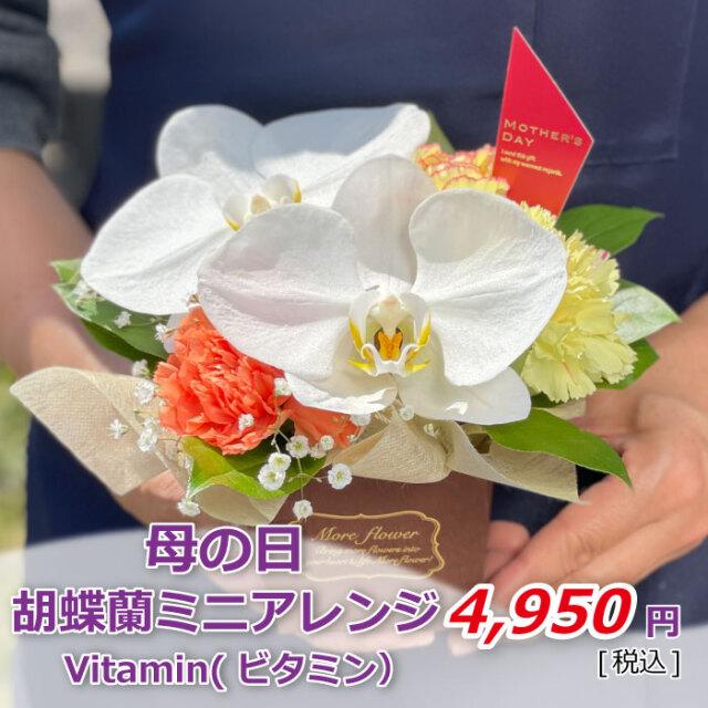 胡蝶蘭ミニアレンジ ビタミン 価格