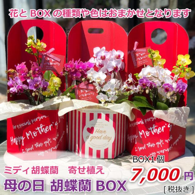 母の日 胡蝶蘭BOX