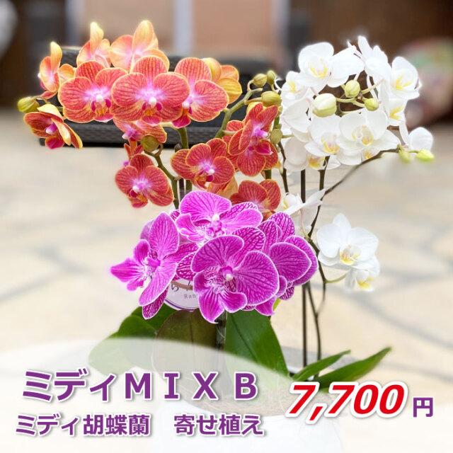 ミディMIX B 価格