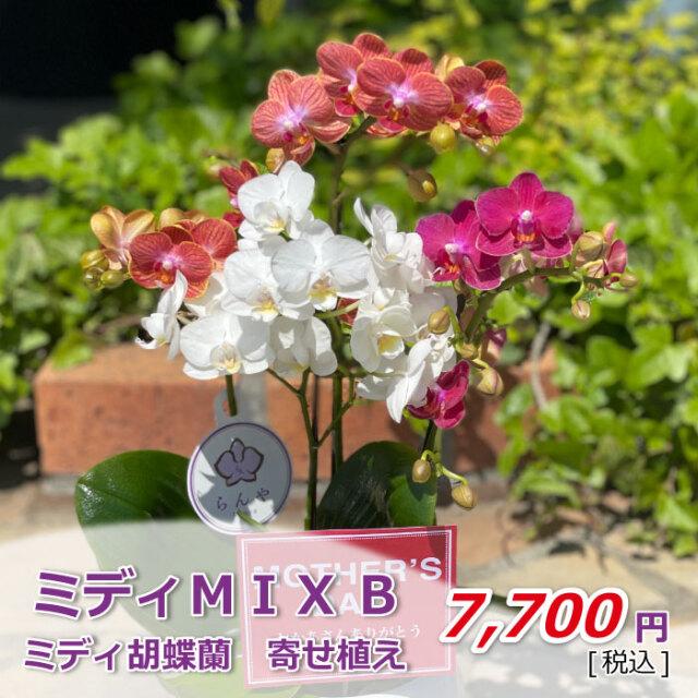 ミディMIX 2021母の日 値段