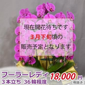 <価格改定>フーラーレディ3f36