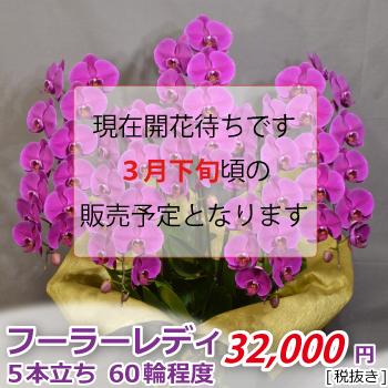 <価格改定>フーラーレディ5F60