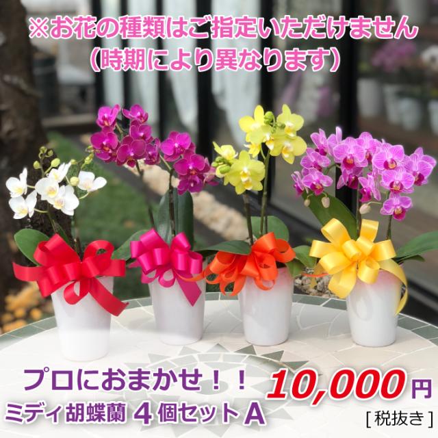 ミディ胡蝶蘭 4個セット