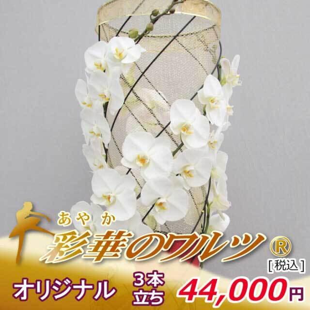 【黒臼洋蘭園だけのオリジナル仕立て】 彩華のワルツ オリジナル