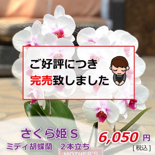 さくら姫S 2F 完売