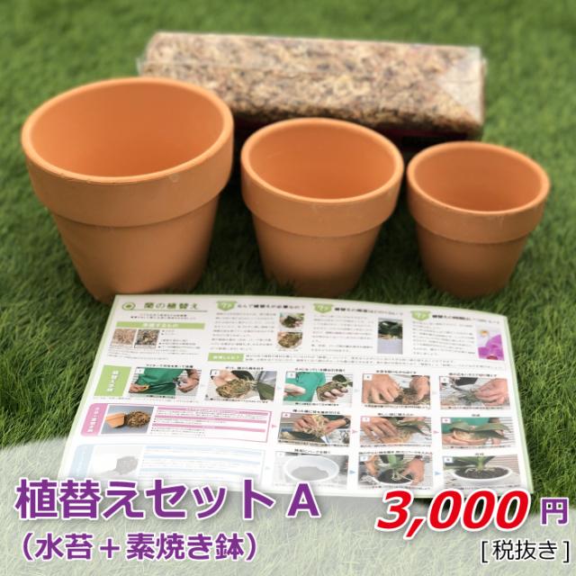 植替えセットA 水苔+素焼き