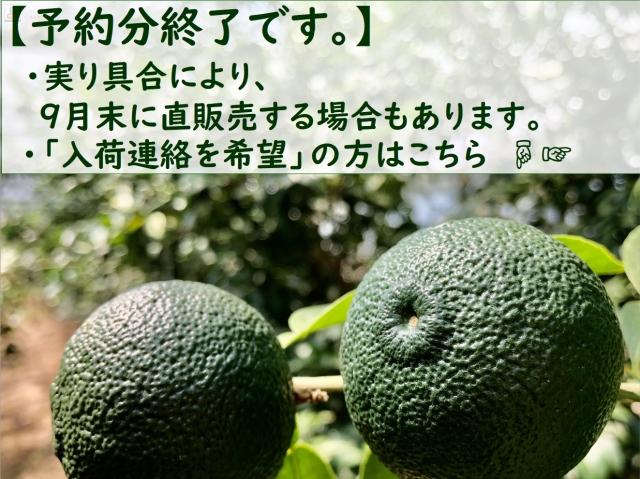 aoyuzu0011.jpg