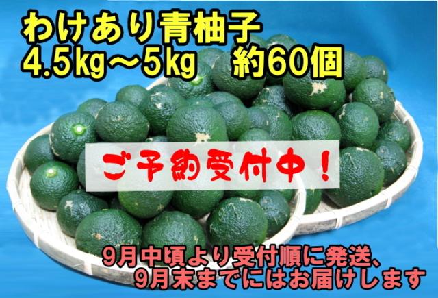 予約受付中 青柚子2~2.5kg