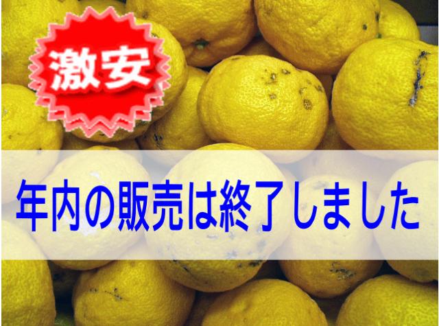 【わけあり柚子/4.5~5kg 35~50玉】
