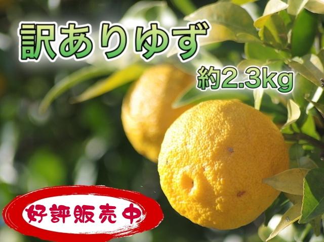 【訳あり】柚子:2~2.5kg(約20個)