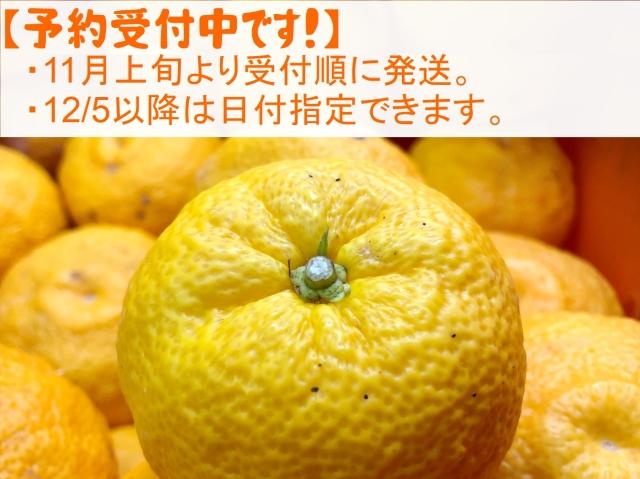 yuzu101010.jpg