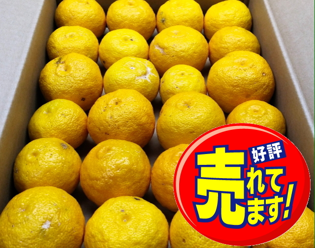 【貯蔵わけあり柚子/約4~4.5kg  35~50玉】