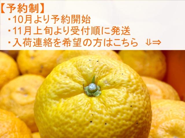yuzu321.jpg