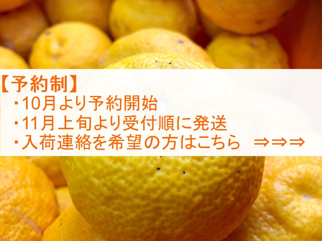 【訳あり】柚子:4.5~5kg(40~48個)