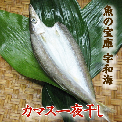 【送料別】【天然魚】宇和海朝獲れ鮮魚の一夜干しカマス1枚