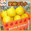 【送料無料】【お試し品】愛媛西宇和産はるか お試し12キロ(3キロ×4箱)デコポンをレモン色にしたような外見「お試し愛媛はるか3×4」