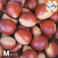 中生栗M5