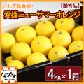 「贈答小夏4」【送料無料】愛媛西宇和産ニューサマーオレンジ(小夏) 贈答用4kg