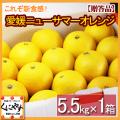 「贈答小夏5.5」【送料無料】愛媛ニューサマーオレンジ(小夏)贈答用5.5kg