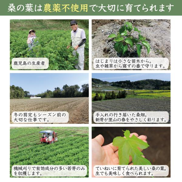国産原料100%桑の葉青汁紹介文2